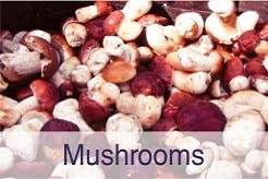 Mushrooms. Solex Agro